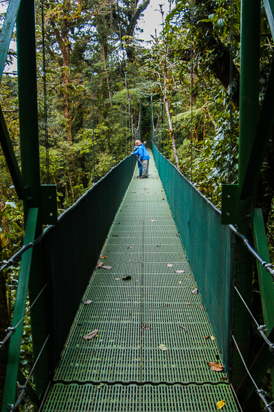 Hanging bridge at tree top level at Monteverde.